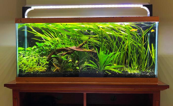 Návrhy akvárií